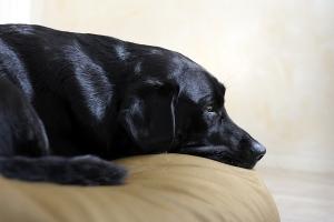Voorbeeldafbeelding Hondenbed type Jumbo S